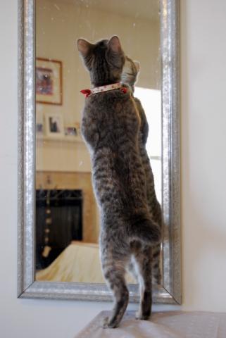 鏡にむかって