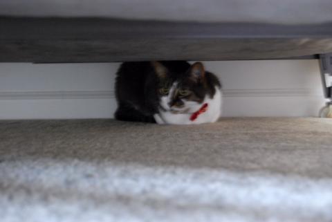 ベッドの下へ避難!