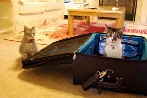 スーツケースはきらい!