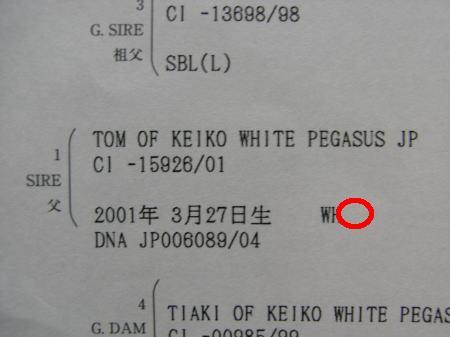 2008ワンコ0139.1