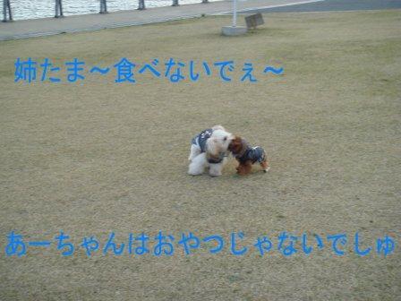 DSC03408.jpg