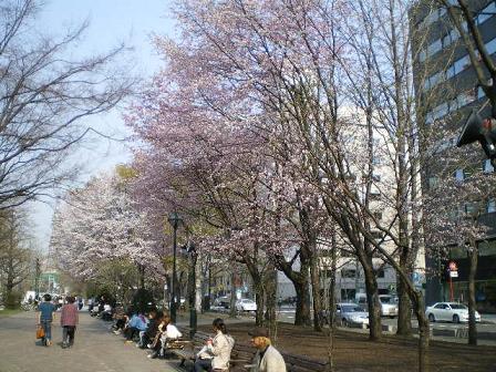 西5丁目桜