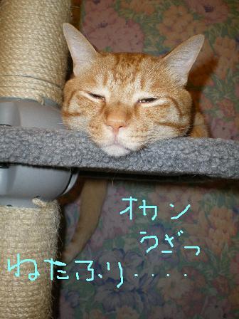 寝たふり寝たふり・・・・