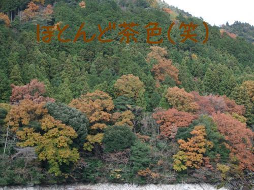 DSCF5237_convert_20081206121959.jpg