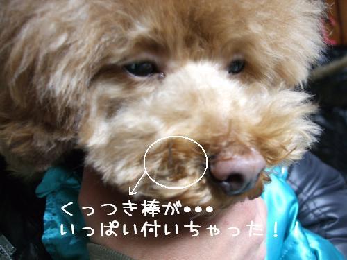 DSCF5565_convert_20090106200239.jpg