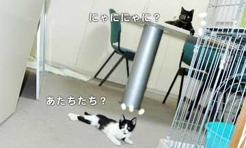 08marine0704_fukukuru