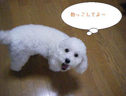 2008_09250095.jpg