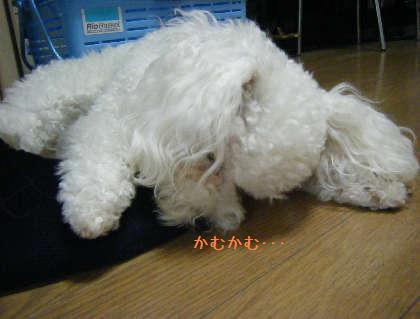 2008_09250101.jpg