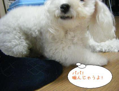 2008_09250102.jpg