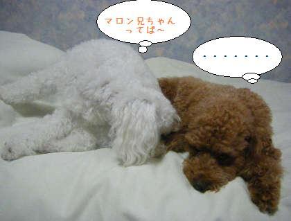 2008_09250109.jpg
