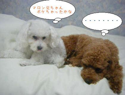 2008_09250110.jpg
