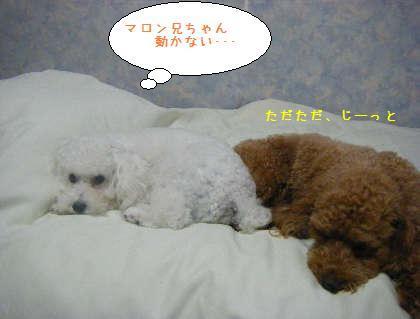 2008_09250113.jpg