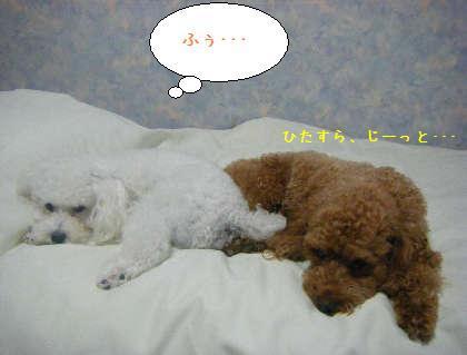 2008_09250114.jpg