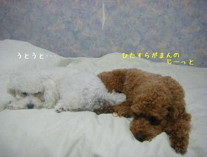 2008_09250116.jpg