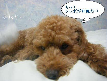 2008_09250118.jpg