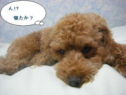 2008_09250119.jpg