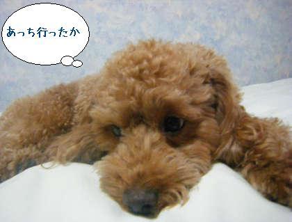 2008_09250120.jpg