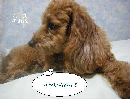 2008_09250121.jpg