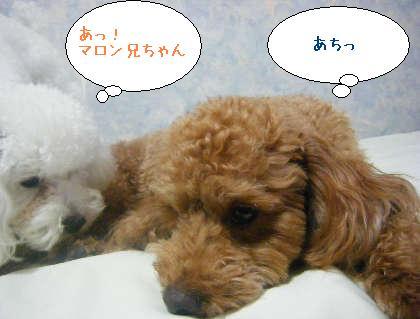 2008_09250124.jpg