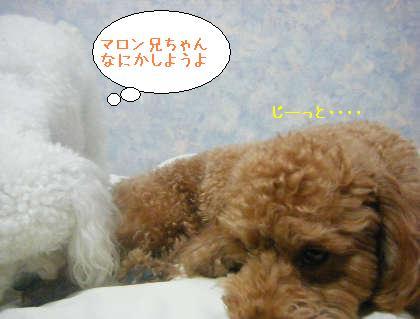 2008_09250126.jpg