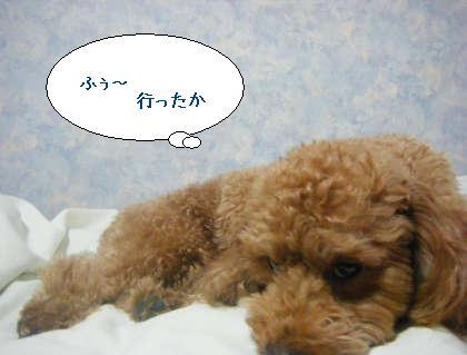 2008_09250127.jpg