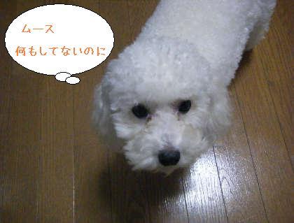 2008_09250141.jpg