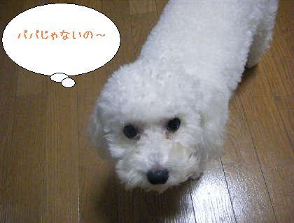 2008_09250143.jpg