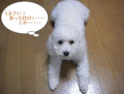 2008_09250145.jpg