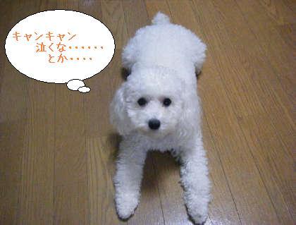 2008_09250146.jpg