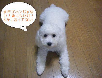 2008_09250147.jpg