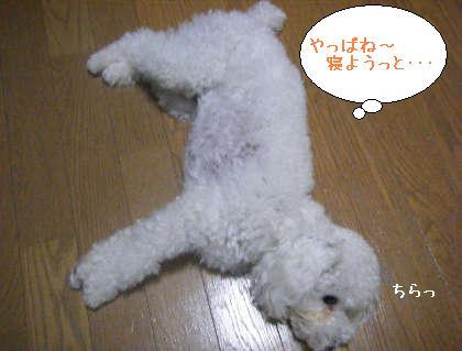 2008_09250149.jpg