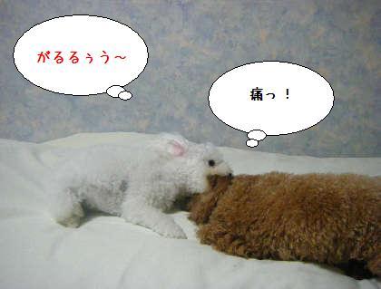 2008_09250155.jpg
