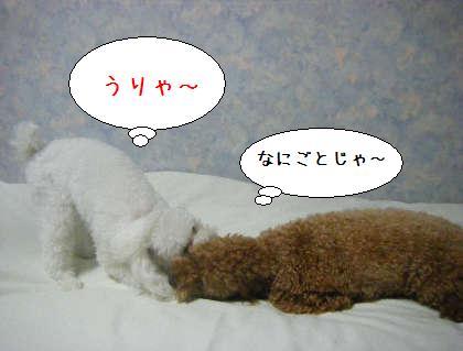 2008_09250157.jpg