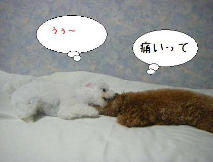 2008_09250161.jpg