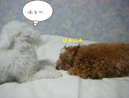 2008_09250179.jpg