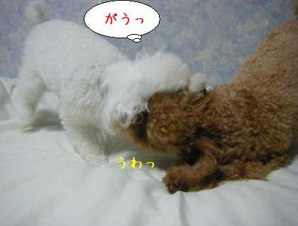 2008_09250183.jpg