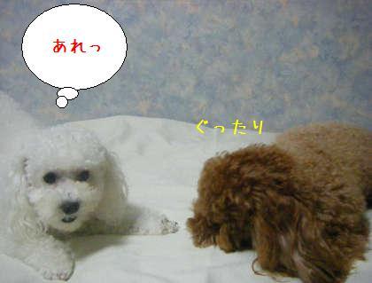 2008_09250187.jpg