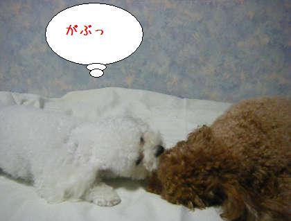 2008_09250188.jpg
