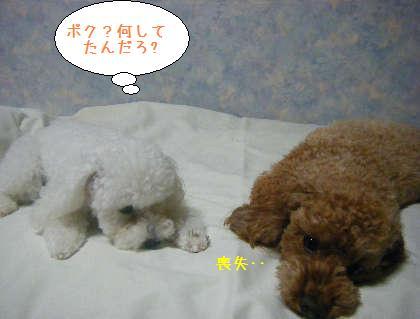 2008_09250193.jpg