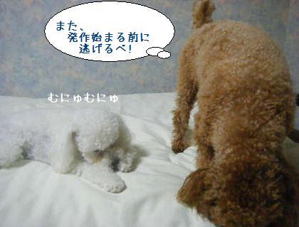 2008_09250205.jpg