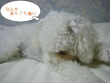 2008_09250208.jpg