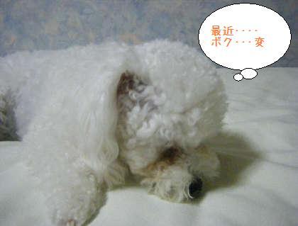2008_09250212.jpg
