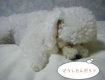 2008_09250214.jpg