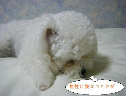 2008_09250215.jpg