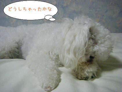 2008_09250216.jpg