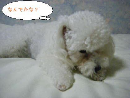 2008_09250217.jpg
