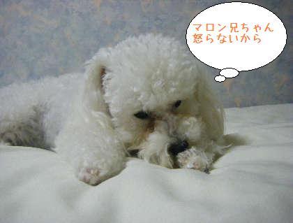2008_09250218.jpg