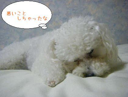 2008_09250219.jpg