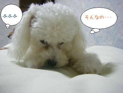 2008_09250227.jpg