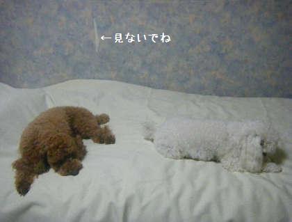 2008_09250231.jpg